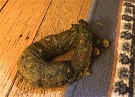 older dog poops in house dogs pooping in the house 28 images oh my pet poops in the house house trained