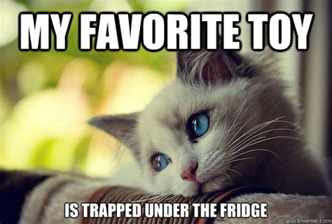 Cat Problems Meme - first world problems cat know your meme
