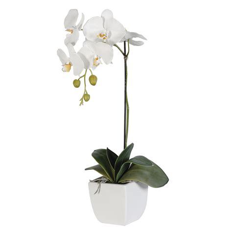 Small Flower Pot by White Phalaenopsis Orchid In Pot
