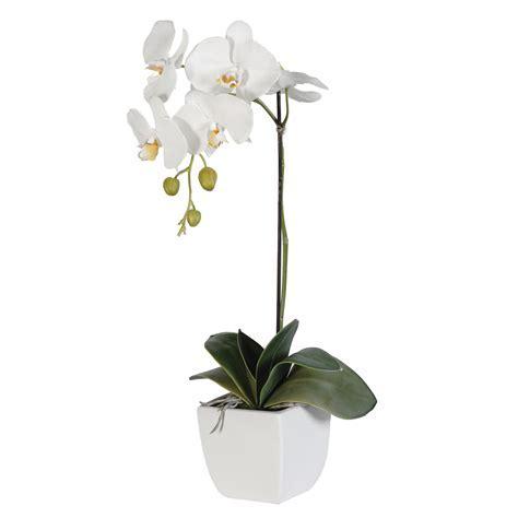 White Phalaenpsis Orchid ? Maten Floral Design