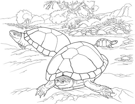 turtle eggs coloring page free turtle coloring pages