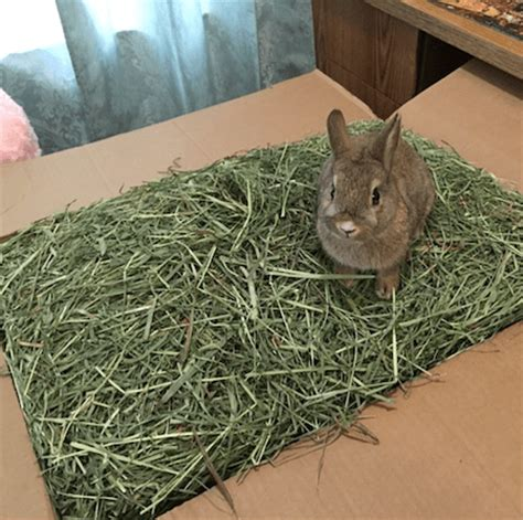 bedding for rabbits can timothy hay be used as bedding small pet select