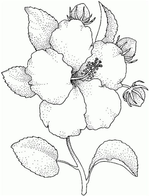 imagenes de flores hermosas para imprimir banco de imagenes y fotos gratis dibujos de flores para