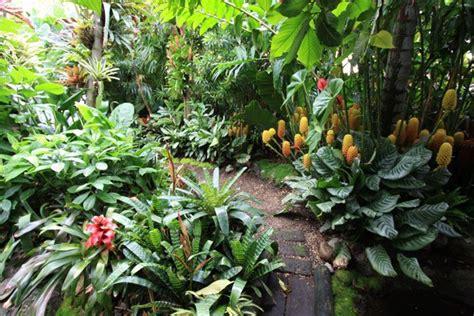 Dannis Sarimbit D Sun Flower dennis hundscheidt tropical garden sunnybank qld