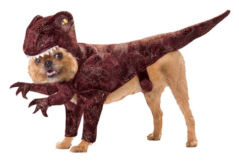 Dont Miss The Best Canine Costumes Onpeoplecom by Best Costumes For Dogs Top Pet Costume Ideas