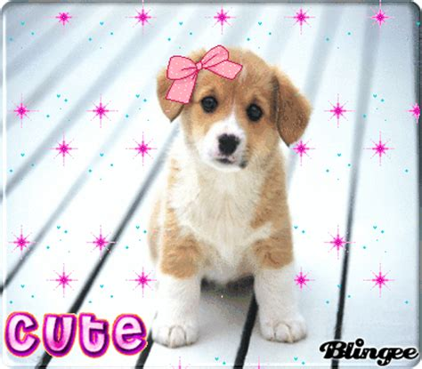 the entire world the cutes puppy in the whole world picture 68256655