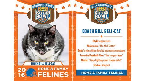 coach bill beli cat home family felines 2016