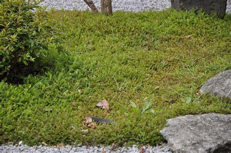 japanischer garten rasen japanischer garten moos garden