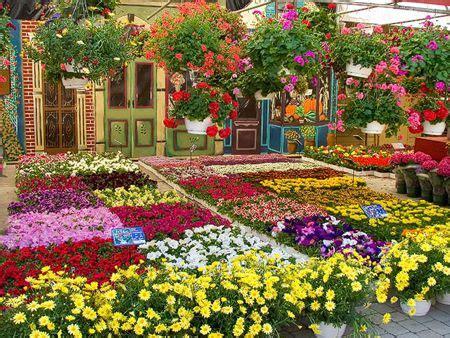 fiore via savona al parco beigua torna l alta via in fiore savonanews it