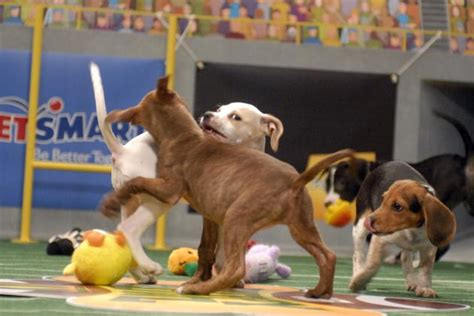 puppy bowl start time puppy bowl xi 2015 tv start time live schedule and draft info