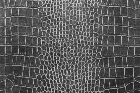 decorating ideas adorable image of dark brown crocodile