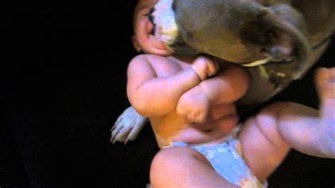 Licks The by Pit Bull Licks Newborn Baby