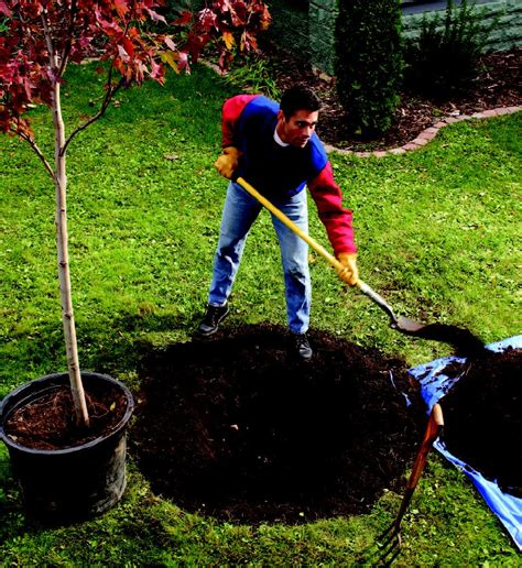 planting tree top 5 tips for planting trees in your garden check my garden