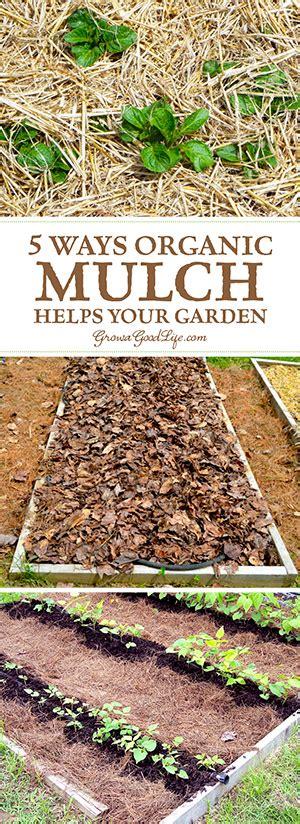 organic mulch for vegetable garden 5 ways organic mulch helps your vegetable garden