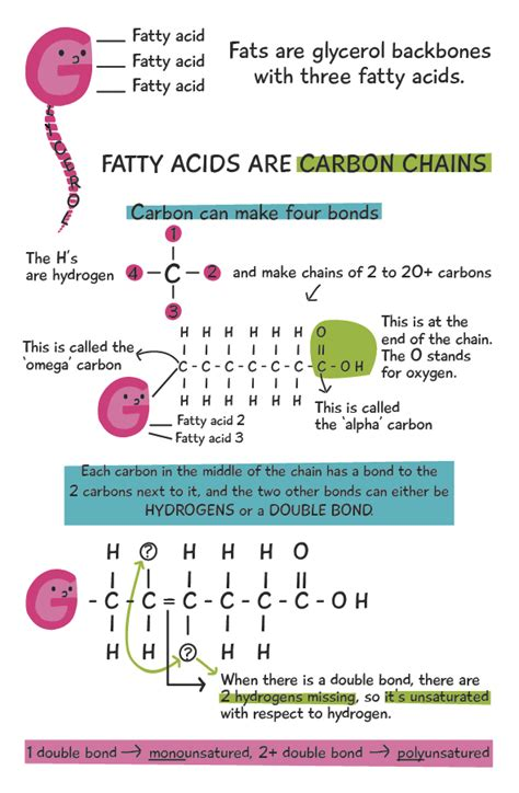healthy fats chemistry fats and bad fats fatty acids revealed