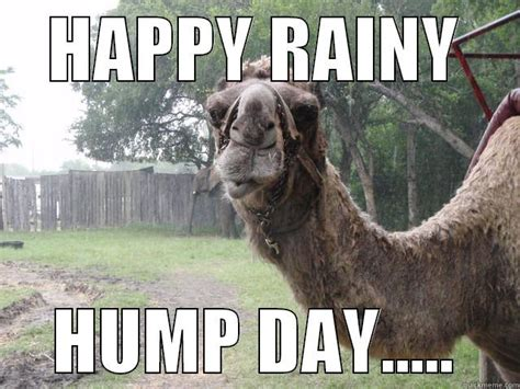 Rainy Day Meme - meme happy rain hump day graphic picsmine