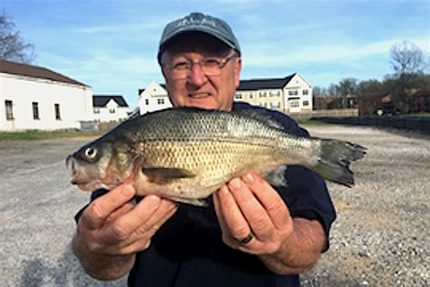 Records In Maryland State Record Catches Reported In Maryland N D Fish