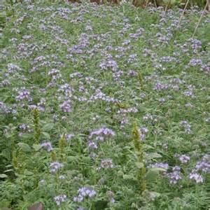 savoir utiliser les engrais verts ferme de sainte marthe