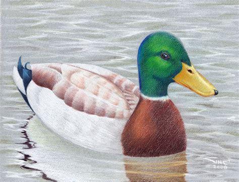 what color are ducks mallard duck commission by sinccolor on deviantart