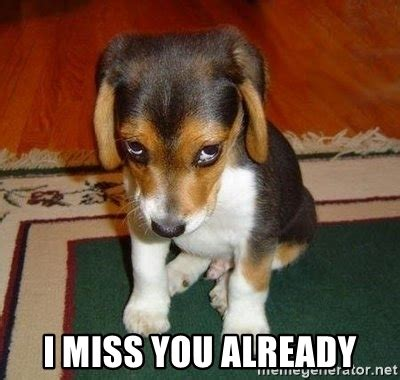 i miss you puppy i miss you already sad puppy meme generator