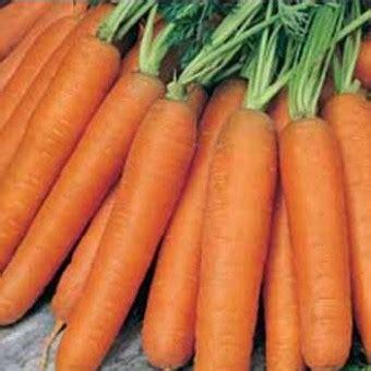Benih Tanaman Wortel benih wortel early nantes