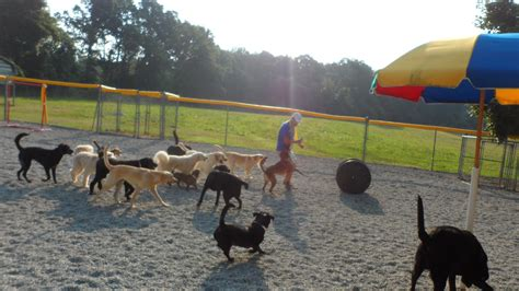 best friends daycare doggie daycare best friends bed biscuit boarding kennel greensboro nc