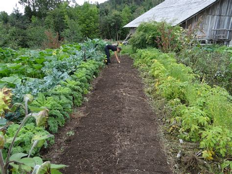 what s in your prepper garden 171 gardening 171 food