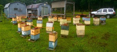 backyard breeding russian carniolan breeding yards e m gold beekeepers
