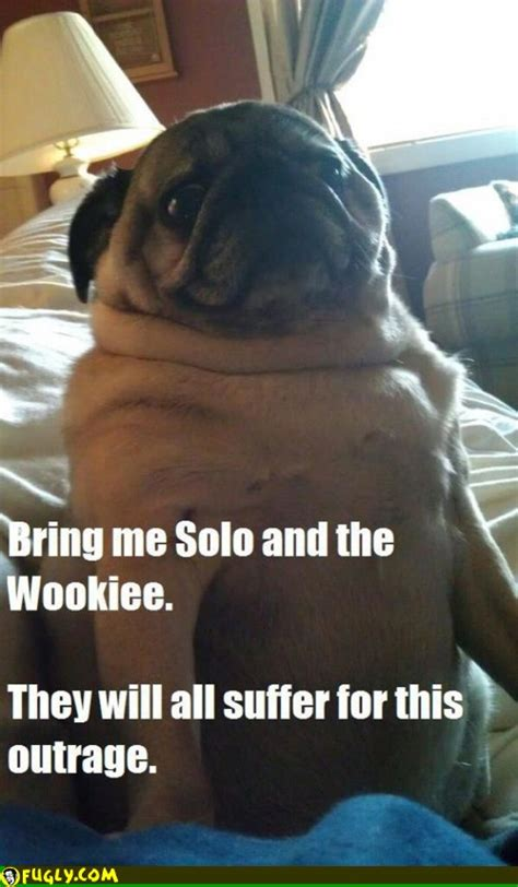 jabba the pug jabba the pug fugly