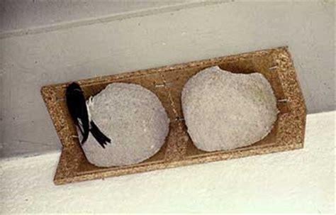 schwegler house martin nest box british bird lovers