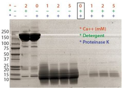 proteinase k digestion residual host cell dna in biopharmaceutical products 96