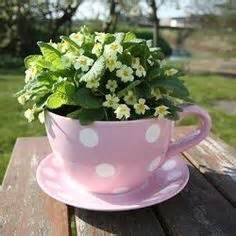 Tea cup flower pots make wonderful decorative pieces for a window or