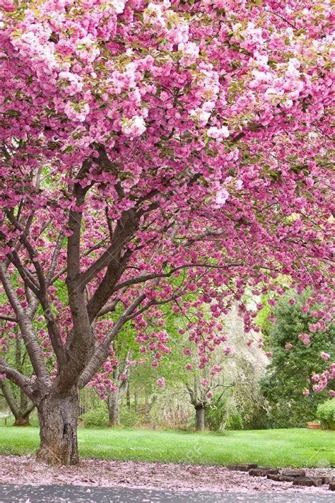 colors of spring refreshing colors of spring nature