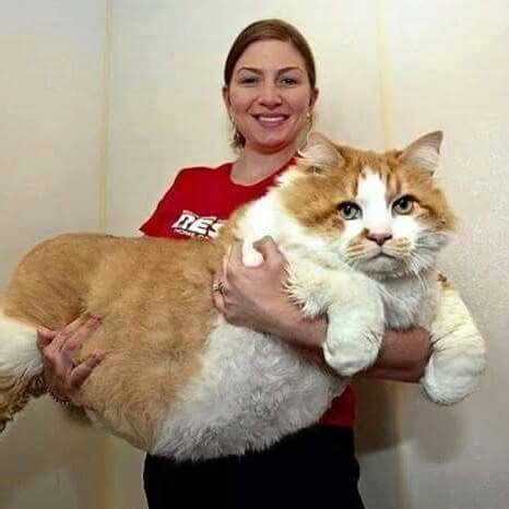 the biggest cat in the world | luvbat