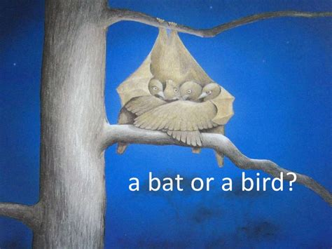 a bat or a bird