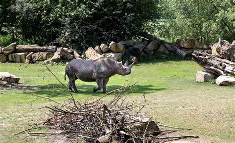 Zoologischer Garten Leipzig öffnungszeiten by Zoos In Deutschland Das Sind Die 10 Sch 246 Nsten Zoos In