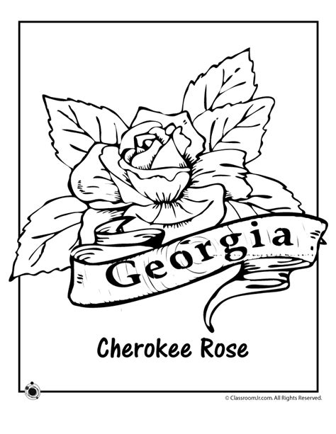 georgia state flower coloring page woo jr kids activities