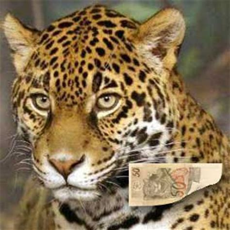 imagenes del jaguar jade eu amo biologia 03 10 11