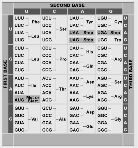 Genetic Code Table by Faculty And Staff Personal Web Space Seattle