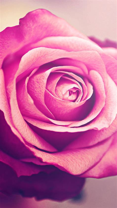 iphone wallpaper hd rose 29 best iphone 6s rose gold wallpaper images on pinterest