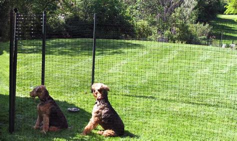 fencing for dogs temporary fencing for your fences for all dogs