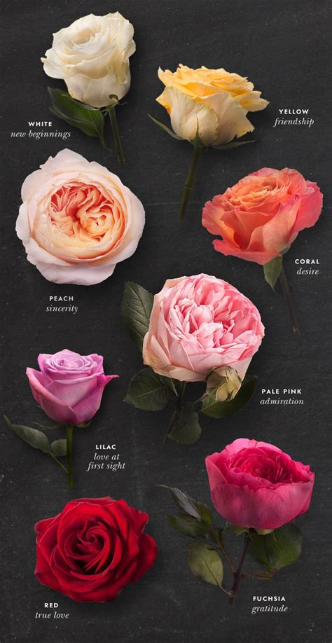 color of roses meaning best 20 color meanings ideas on
