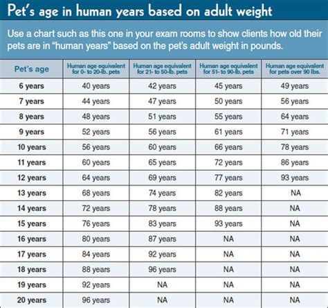 how do dogs age how our pets age ansley animal clinic