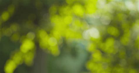 natural summer bokeh blur background stock footage video