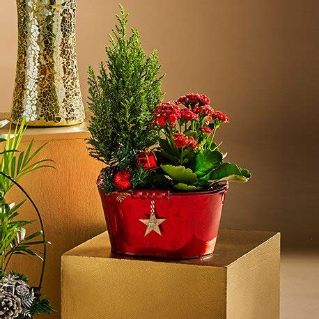 morrisons christmas trees festive zinc planter with planted glittering tree flowering plant decorations 163 5