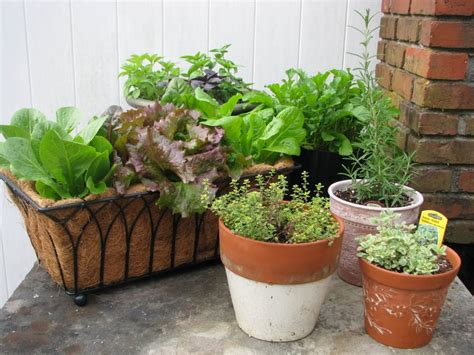 What Is Vegetable Gardening The Benefits Of Container Vegetable Gardening Desain