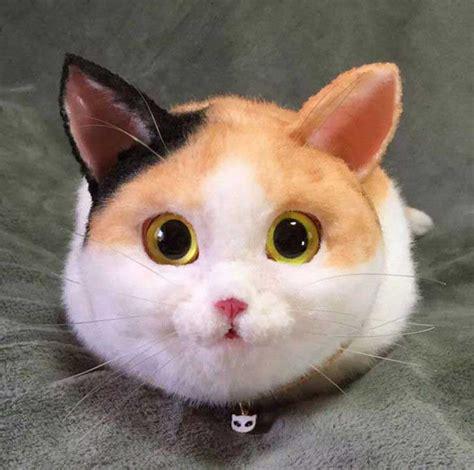 imágenes de animales para whatsapp im 225 genes de gatos para perfil de whatsapp fondos