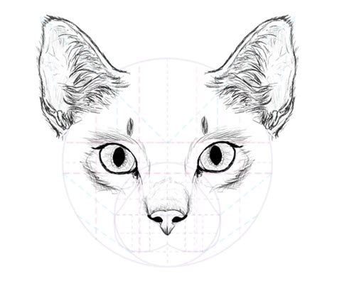 A Drawing Of A Cat by How To Draw Animals Cats And Their Anatomy