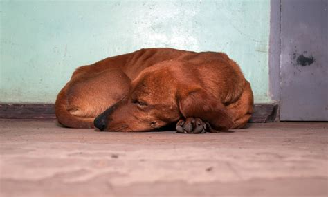 why do dogs hump their bed why do dogs curl up when they sleep besides to be super