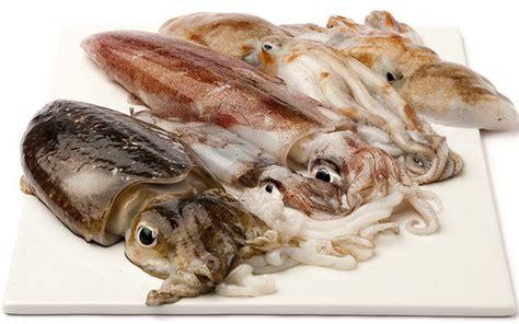 cucinare il calamaro sono seppie o calamari piattoforte
